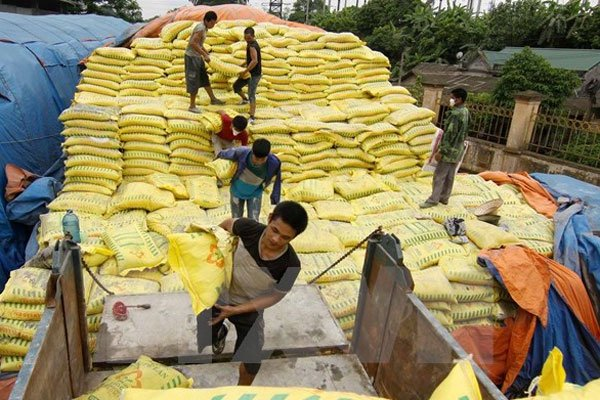 Safeguard duty on fertilizer imports may cause rice production costs to surge, vietnam economy, business news, vn news, vietnamnet bridge, english news, Vietnam news, news Vietnam, vietnamnet news, vn news, Vietnam net news, Vietnam latest news, Vietnam b