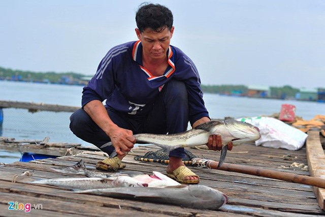 Cause of Cha Va River fish deaths determined, Vietnam environment, climate change in Vietnam, Vietnam weather, Vietnam climate, pollution in Vietnam, environmental news, sci-tech news, vietnamnet bridge, english news, Vietnam news, news Vietnam, vietnamne