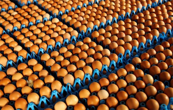 Egg contamination scare, EU Commissioner, call for summit