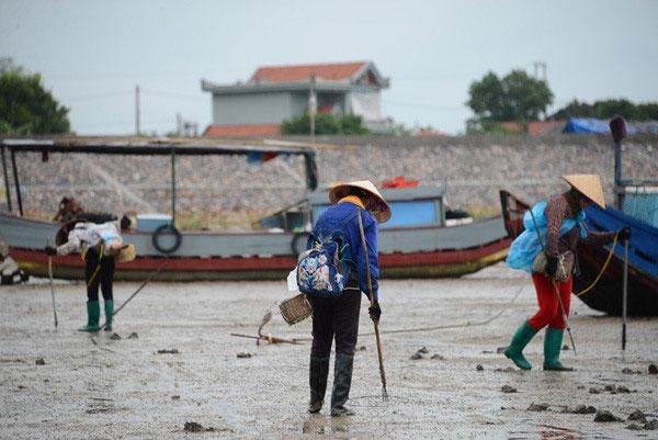 Quang Ninh, illegal fishing, using banned fishing equipment, Vietnam economy, Vietnamnet bridge, English news about Vietnam, Vietnam news, news about Vietnam, English news, Vietnamnet news, latest news on Vietnam, Vietnam