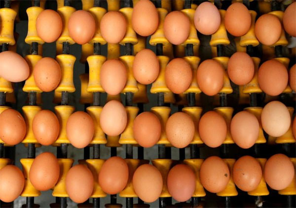 Belgium, contaminated egg scandal, seek damages over, arrested two suspects