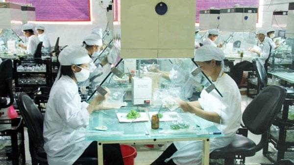 Private labs, mushroom, Vietnam economy, Vietnamnet bridge, English news about Vietnam, Vietnam news, news about Vietnam, English news, Vietnamnet news, latest news on Vietnam, Vietnam