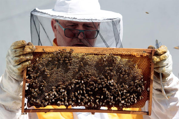 Slovenia's capital, bees on the roof