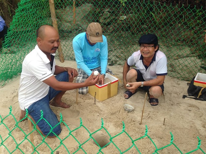 Cham Island saves threatened turtle, Vietnam environment, climate change in Vietnam, Vietnam weather, Vietnam climate, pollution in Vietnam, environmental news, sci-tech news, vietnamnet bridge, english news, Vietnam news, news Vietnam, vietnamnet news, V