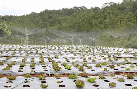 High-tech farms offer vision of future, vietnam economy, business news, vn news, vietnamnet bridge, english news, Vietnam news, news Vietnam, vietnamnet news, vn news, Vietnam net news, Vietnam latest news, Vietnam breaking news
