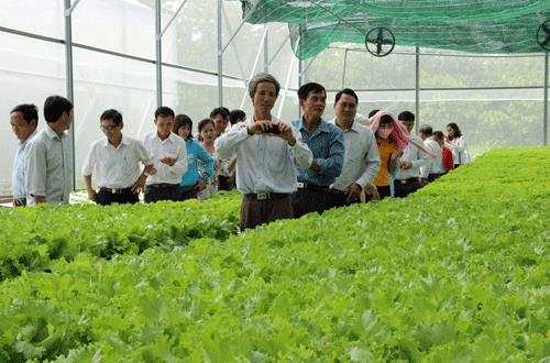 500 workers to go to Japan to study agriculture skills, social news, vietnamnet bridge, english news, Vietnam news, news Vietnam, vietnamnet news, Vietnam net news, Vietnam latest news, vn news, Vietnam breaking news