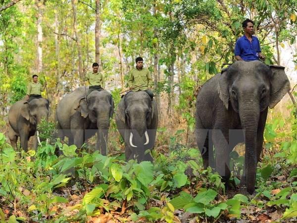 Elephant sanctuary established in Quang Nam, Vietnam environment, climate change in Vietnam, Vietnam weather, Vietnam climate, pollution in Vietnam, environmental news, sci-tech news, vietnamnet bridge, english news, Vietnam news, news Vietnam, vietnamnet