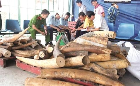 vietnam economy, business news, vn news, vietnamnet bridge, english news, Vietnam news, news Vietnam, vietnamnet news, vn news, Vietnam net news, Vietnam latest news, Vietnam breaking news, elephant tusk, trafficking, CITES