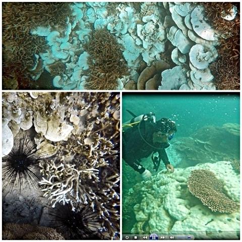 Ba Ria - Vung Tau restores coral reefs, Vietnam environment, climate change in Vietnam, Vietnam weather, Vietnam climate, pollution in Vietnam, environmental news, sci-tech news, vietnamnet bridge, english news, Vietnam news, news Vietnam, vietnamnet news
