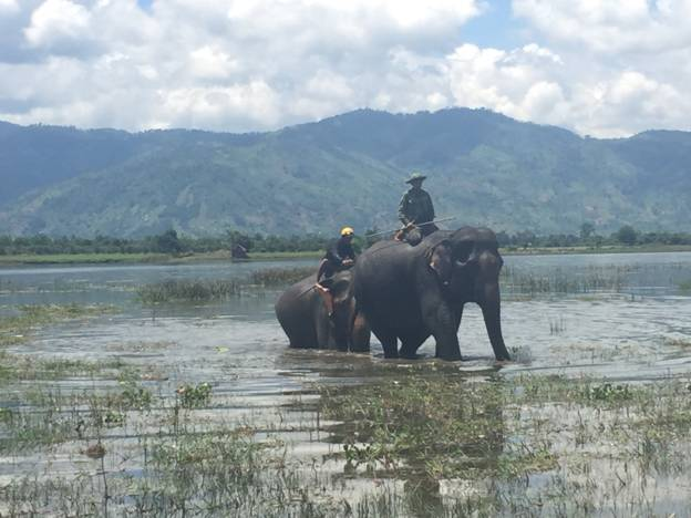 First domesticated elephant to be born in Dak Lak after 30 years, Vietnam environment, climate change in Vietnam, Vietnam weather, Vietnam climate, pollution in Vietnam, environmental news, sci-tech news, vietnamnet bridge, english news, Vietnam news, new