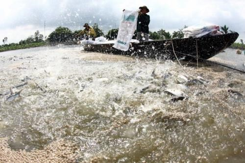 Vietnam steps up aquaculture cooperation with Cambodia, Government news, Vietnam breaking news, politic news, vietnamnet bridge, english news, Vietnam news, news Vietnam, vietnamnet news, Vietnam net news, Vietnam latest news, vn news
