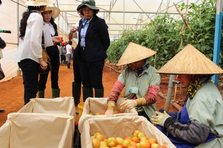 $500m spent annually on imported plant varieties, vietnam economy, business news, vn news, vietnamnet bridge, english news, Vietnam news, news Vietnam, vietnamnet news, vn news, Vietnam net news, Vietnam latest news, Vietnam breaking news