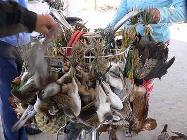 Bird trade escalating in VN: study