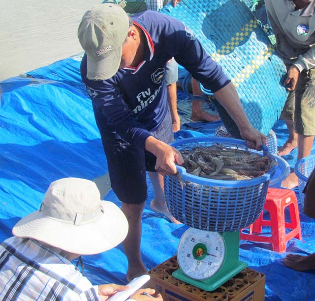 Farmers turn to shrimp as prices soar, vietnam economy, business news, vn news, vietnamnet bridge, english news, Vietnam news, news Vietnam, vietnamnet news, vn news, Vietnam net news, Vietnam latest news, Vietnam breaking news
