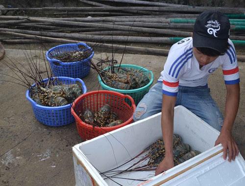 vietnam economy, business news, vn news, vietnamnet bridge, english news, Vietnam news, news Vietnam, vietnamnet news, vn news, Vietnam net news, Vietnam latest news, Vietnam breaking news, Phu Yen, shrimp pond, MARD