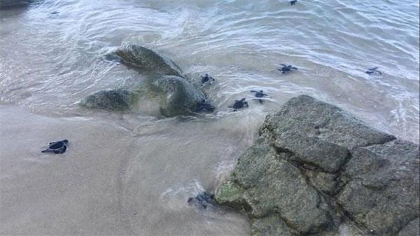 Egg hatching efforts help rebuild turtle population