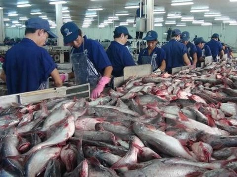 VN firms seek market for tra fish