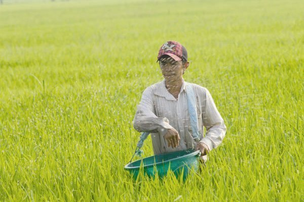 Vietnam spends heavily on fertilizer, pesticide imports, vietnam economy, business news, vn news, vietnamnet bridge, english news, Vietnam news, news Vietnam, vietnamnet news, vn news, Vietnam net news, Vietnam latest news, Vietnam breaking news