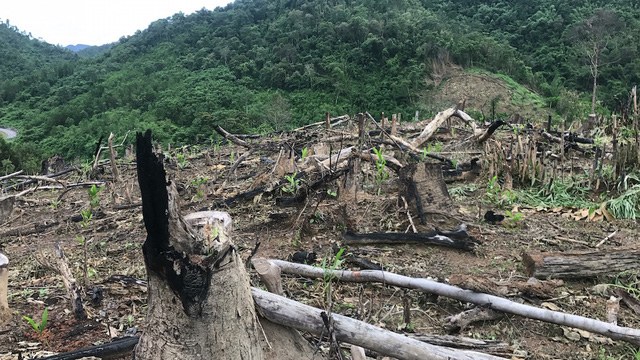 Nghe An officials face dismissal for deforestation scam, environmental news, sci-tech news, vietnamnet bridge, english news, Vietnam news, news Vietnam, vietnamnet news, Vietnam net news, Vietnam latest news, Vietnam breaking news, vn news