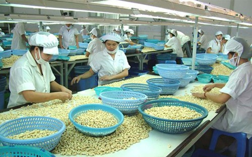 vietnam economy, business news, vn news, vietnamnet bridge, english news, Vietnam news, news Vietnam, vietnamnet news, vn news, Vietnam net news, Vietnam latest news, Vietnam breaking news, cashew nut export, technology transfer, MOIT