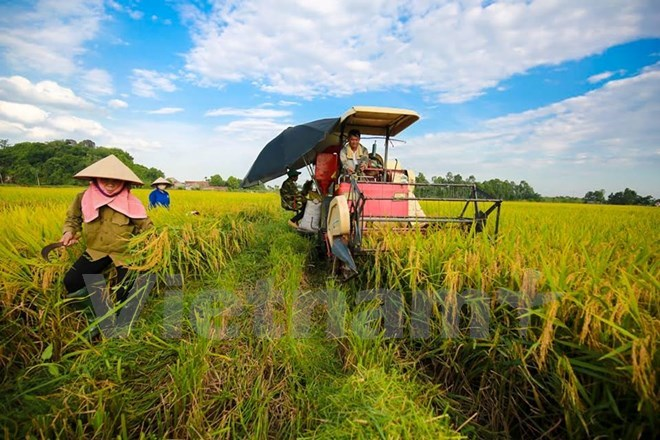 Vietnam, Germany cooperate in vocational training for farmers, social news, vietnamnet bridge, english news, Vietnam news, news Vietnam, vietnamnet news, Vietnam net news, Vietnam latest news, vn news, Vietnam breaking news