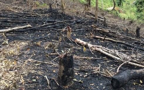 Forests destroyed in northern Dien Bien province, Vietnam environment, climate change in Vietnam, Vietnam weather, Vietnam climate, pollution in Vietnam, environmental news, sci-tech news, vietnamnet bridge, english news, Vietnam news, news Vietnam, vietn