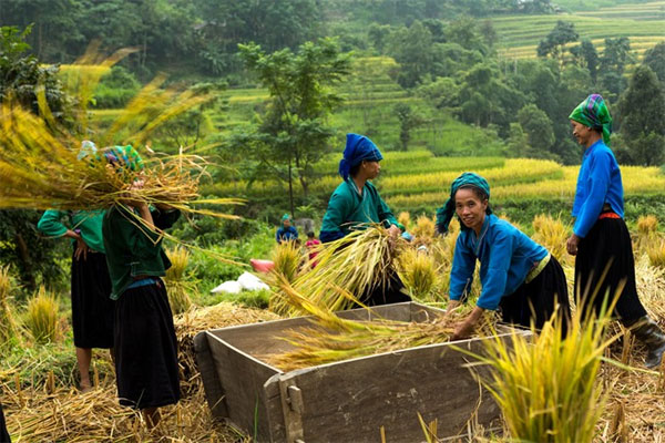 Homestay service offers more sustainable tourism