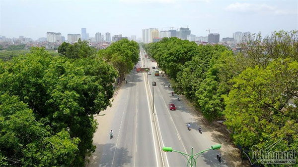 Pham Van Dong Street, old trees, chopped down, remove trees, Vietnam economy, Vietnamnet bridge, English news about Vietnam, Vietnam news, news about Vietnam, English news, Vietnamnet news, latest news on Vietnam, Vietnam
