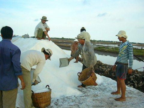 Salt price doubles, middlemen benefit, vietnam economy, business news, vn news, vietnamnet bridge, english news, Vietnam news, news Vietnam, vietnamnet news, vn news, Vietnam net news, Vietnam latest news, Vietnam breaking news