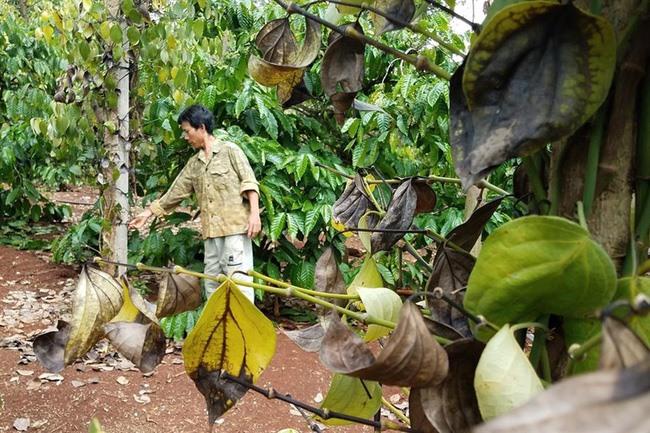 Interest groups weaken fake fertiliser crackdown: meeting