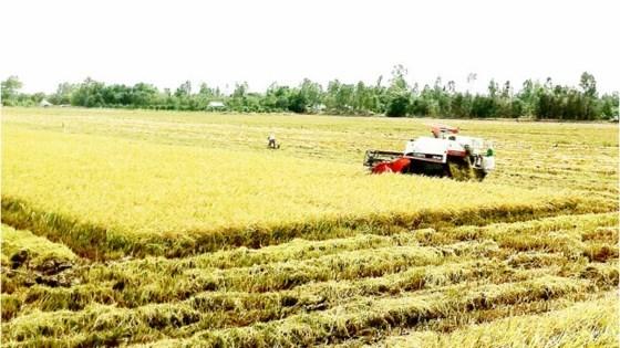 Vietnam uses remote sensing to monitor rice production, social news, vietnamnet bridge, english news, Vietnam news, news Vietnam, vietnamnet news, Vietnam net news, Vietnam latest news, vn news, Vietnam breaking news