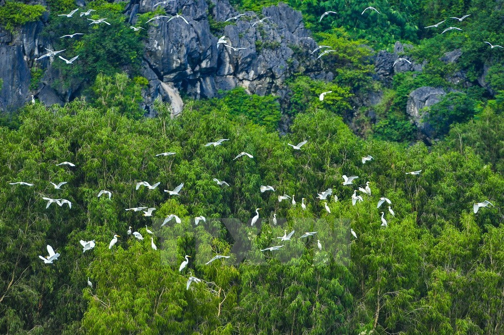 Spectacular beauty of Van Long Nature Reserve, travel news, Vietnam guide, Vietnam airlines, Vietnam tour, tour Vietnam, Hanoi, ho chi minh city, Saigon, travelling to Vietnam, Vietnam travelling, Vietnam travel, vn news
