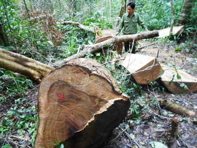 vietnam economy, business news, vn news, vietnamnet bridge, english news, Vietnam news, news Vietnam, vietnamnet news, vn news, Vietnam net news, Vietnam latest news, Vietnam breaking news, deforestation, forest closure, central highlands