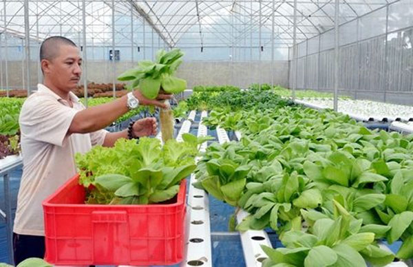 High-tech agriculture, transfer advanced farming techniques, Vietnam economy, Vietnamnet bridge, English news about Vietnam, Vietnam news, news about Vietnam, English news, Vietnamnet news, latest news on Vietnam, Vietnam