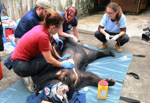 Three illegally-kept bears rescued in Ninh Binh, Vietnam environment, climate change in Vietnam, Vietnam weather, Vietnam climate, pollution in Vietnam, environmental news, sci-tech news, vietnamnet bridge, english news, Vietnam news, news Vietnam,