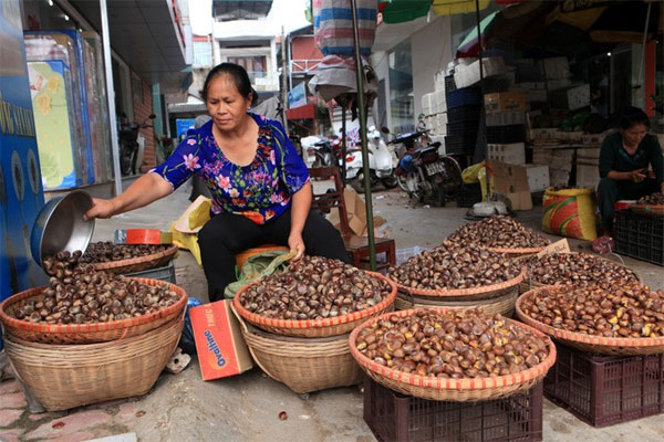 Trung Khanh chestnut, Cao Bang, Vietnam economy, Vietnamnet bridge, English news about Vietnam, Vietnam news, news about Vietnam, English news, Vietnamnet news, latest news on Vietnam, Vietnam