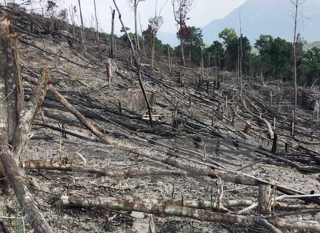 Deforestation ongoing in Binh Dinh province