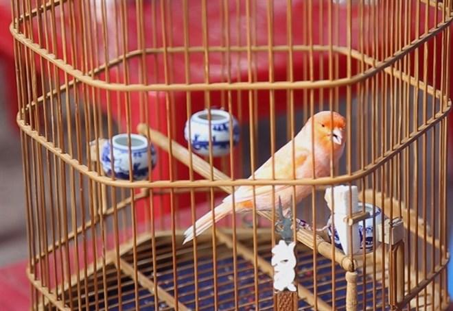 Saigon mornings are for the beautiful birds