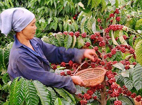 Vietnam to build upscale coffee brand