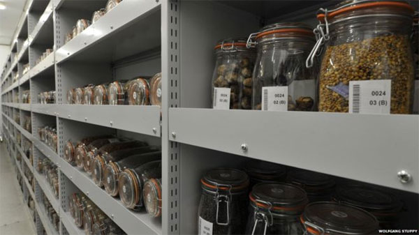 Seeds hold hidden treasures for future food