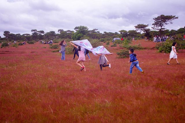 Discover vibrant pink grass hills of Gia Lai, travel news, Vietnam guide, Vietnam airlines, Vietnam tour, tour Vietnam, Hanoi, ho chi minh city, Saigon, travelling to Vietnam, Vietnam travelling, Vietnam travel, vn news