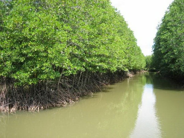 Cape Ca Mau National Park, protective coastal forests, Vietnam economy, Vietnamnet bridge, English news about Vietnam, Vietnam news, news about Vietnam, English news, Vietnamnet news, latest news on Vietnam, Vietnam