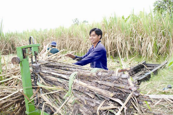 vietnam economy, business news, vn news, vietnamnet bridge, english news, Vietnam news, news Vietnam, vietnamnet news, vn news, Vietnam net news, Vietnam latest news, Vietnam breaking news, sugar industry, ATIGA, Vo Tong Xuan