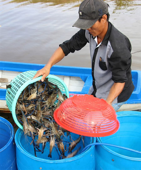 Mekong Delta, climate change, farmers, find opportunity, Vietnam economy, Vietnamnet bridge, English news about Vietnam, Vietnam news, news about Vietnam, English news, Vietnamnet news, latest news on Vietnam, Vietnam