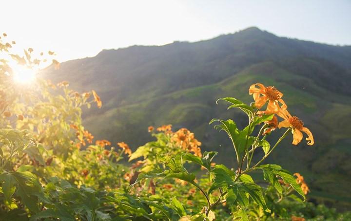 Central Highlands enlivened by vibrant wild flowers, travel news, Vietnam guide, Vietnam airlines, Vietnam tour, tour Vietnam, Hanoi, ho chi minh city, Saigon, travelling to Vietnam, Vietnam travelling, Vietnam travel, vn news