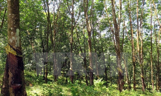 Vietnam records progress in forestry development, Vietnam environment, climate change in Vietnam, Vietnam weather, Vietnam climate, pollution in Vietnam, environmental news, sci-tech news, vietnamnet bridge, english news, Vietnam news, news Vietnam, vietn