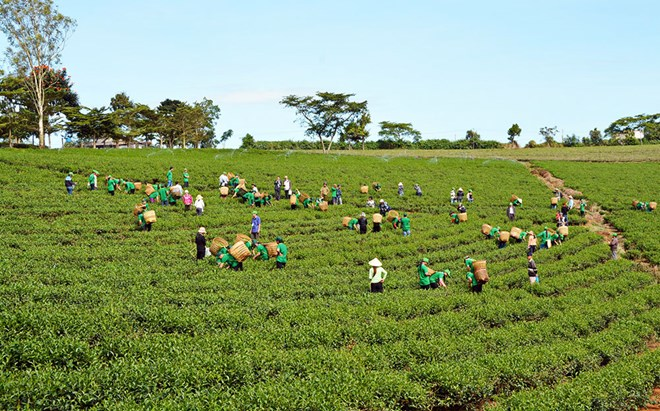 Lam Dong tea & silk to be promoted at Da Lat flower festival, Deputy PM pushes SOE equitisation, Korean firms eye Vietnam partners, Fruits, vegetables export reach 3.16 billion USD in 11 months