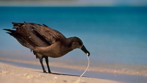 Ocean plastic, plastic waste, halt plastic pollution