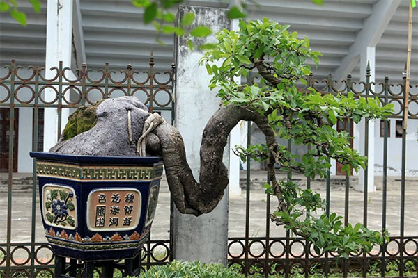 Exhibition, ornamental plant and bird, trends of ornamental items, Vietnam economy, Vietnamnet bridge, English news about Vietnam, Vietnam news, news about Vietnam, English news, Vietnamnet news, latest news on Vietnam, Vietnam