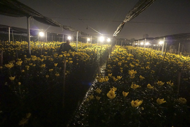 Hanoi flower village sparkles at night, social news, vietnamnet bridge, english news, Vietnam news, news Vietnam, vietnamnet news, Vietnam net news, Vietnam latest news, vn news, Vietnam breaking news